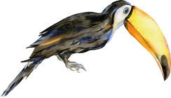 That's Mine Wallsticker Rafi The Toucan